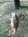 První letošní ryba - Okoun obecný - Sázava 14.jpg