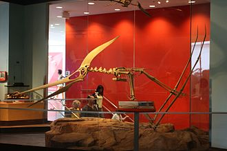 Pteranodon - Skeleton of P. longiceps, in launch pose, Telus World of Science, Vancouver