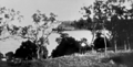 Queensland State Archives 1021 The Gap Lindeman Island c 1931.png