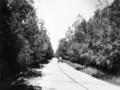 Queensland State Archives 1931 The Oaks Avenue Tweed HeadsMurwillumbah Road c 1934.png