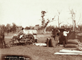 Queensland State Archives 5189 Harvesting Roma 1899.png
