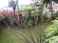 Quinta do Descanso, Santa Luzia, Funchal - 29 Jan 2012 - SDC15779.JPG