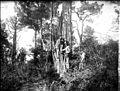 Récolte de la résine, Arcachon, septembre 1890 (6028132091).jpg