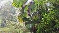 Rainforestation, Kuranda - panoramio (7).jpg