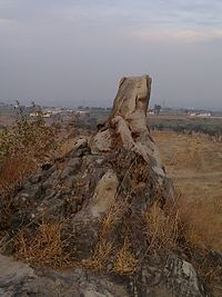 Rawat-Dog's tooth.jpg