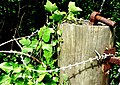 Razor wired gate post - geograph.org.uk - 831507.jpg