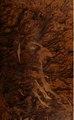 Recopilacion de leyes de los reynos de las Indias. Mandadas imprimir y publicar por la Magestad católica del Rey Don Cárlos II. Nuestro Señor (IA b28770055 0002).pdf