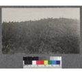 Redwood cut-over land on lower Gualala River below Annapolis, showing line between unburned and recently burned land. August, 1921.png