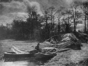 Reed-harvesting-ahhinton-1904.jpg