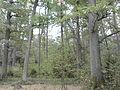 Rezerwat przyrody Dęby w Meszczach 11.20 01.jpg