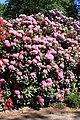 Rhododendronpark Bremen 20090513 109.JPG