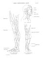 Richer - Anatomie artistique, 2 p. 80.png