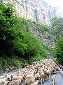 Rigaud - Gorges du Cians - JPG1.jpg