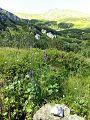 Roślinność Tatr.jpg