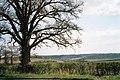 Roadside tree near Notoaks Wood - geograph.org.uk - 190233.jpg