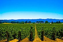 A vineyard in Alexander Valley, California.