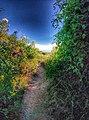 Rock-cornwall-england-tobefree-20150715-165307-01.jpg
