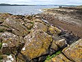 Rock Formation, Portencross - geograph.org.uk - 496266.jpg