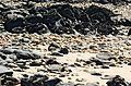 Rocks-Mersey-Devonport-20070310-007.jpg