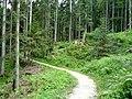 Roemerzeitliche Siedlung Michlhallberg Altaussee.JPG