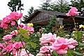 Rose Garden - panoramio.jpg