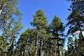 Rovaniemi, Finland (15) (36515923682).jpg