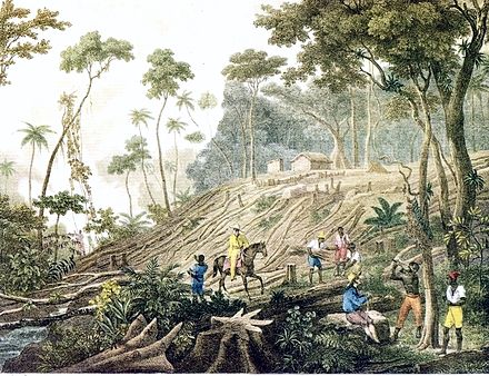 Deforestation of Brazil's Atlantic Forest c.1820-1825 Rugendas - Defrichement d une Foret.jpg