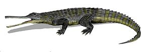 1844 in paleontology - Rutiodon, a relative of Termatosaurus.