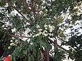 Sófores al carrer d'Alfons XII20200711 151154.jpg