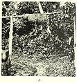 SCHWAB(1947) Fig. 036a.jpg