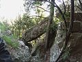 SIERRA LA BARROSA - panoramio - MAURICIO BLANCO (4).jpg