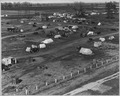 Sacramento, California. Squatter camp of agricultural labor migrants one-eighth mile outside city li . . . - NARA - 521733.tif