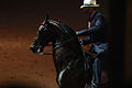 Saddlebred Stallion in the Five Gaited Stake at Shelbyville, KY (7714698630).jpg
