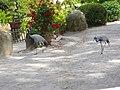 Saint-Jacut-les-Pins - Tropical Parc (18).jpg