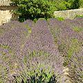 Saint Rémy de Provence 3755 (28887094536).jpg