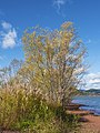 Salagou Lake, Liausson 04.jpg