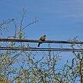 San Pedro de Atacama-CTJ-IMG 6731.jpg