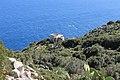 Santa Maria di Leuca,Puglia - panoramio (23).jpg