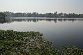 Santragachi Lake - Howrah 2013-01-25 3601.JPG
