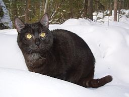 https://upload.wikimedia.org/wikipedia/commons/thumb/d/d2/Scary_black_cat_in_snow.JPG/256px-Scary_black_cat_in_snow.JPG