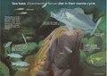 Sea bass in their maritime life cycle.pdf