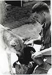 Sgt. Spano and Lobo, Da Nang, Vietnam, August 1968 (5859859069).jpg