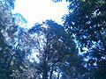 Shivapuri National Park (9).jpg