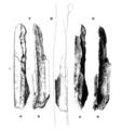Sinanthropus Femur III.png