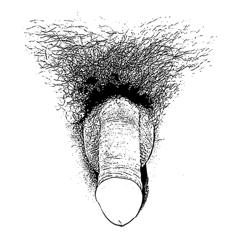 Detailed Dick Drawing