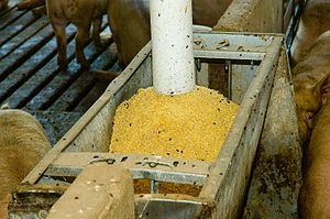 Soybean meal - Soybean meal used to feed pigs