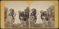 Spencer, from Robert N. Dennis collection of stereoscopic views.png