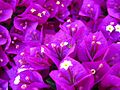 Spider-Flowers-Purple ForestWander.jpg