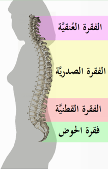 b4958558a0425 ألم ظهر - ويكيبيديا، الموسوعة الحرة