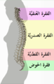 Spinal column curvature 2011-ar.png